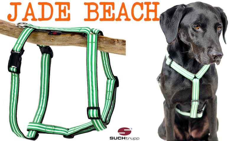 BEACH Hundegeschirr SALE