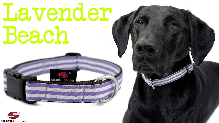 BEACH Hundehalsband SALE
