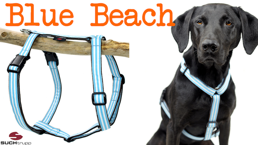 BEACH Hundegeschirr